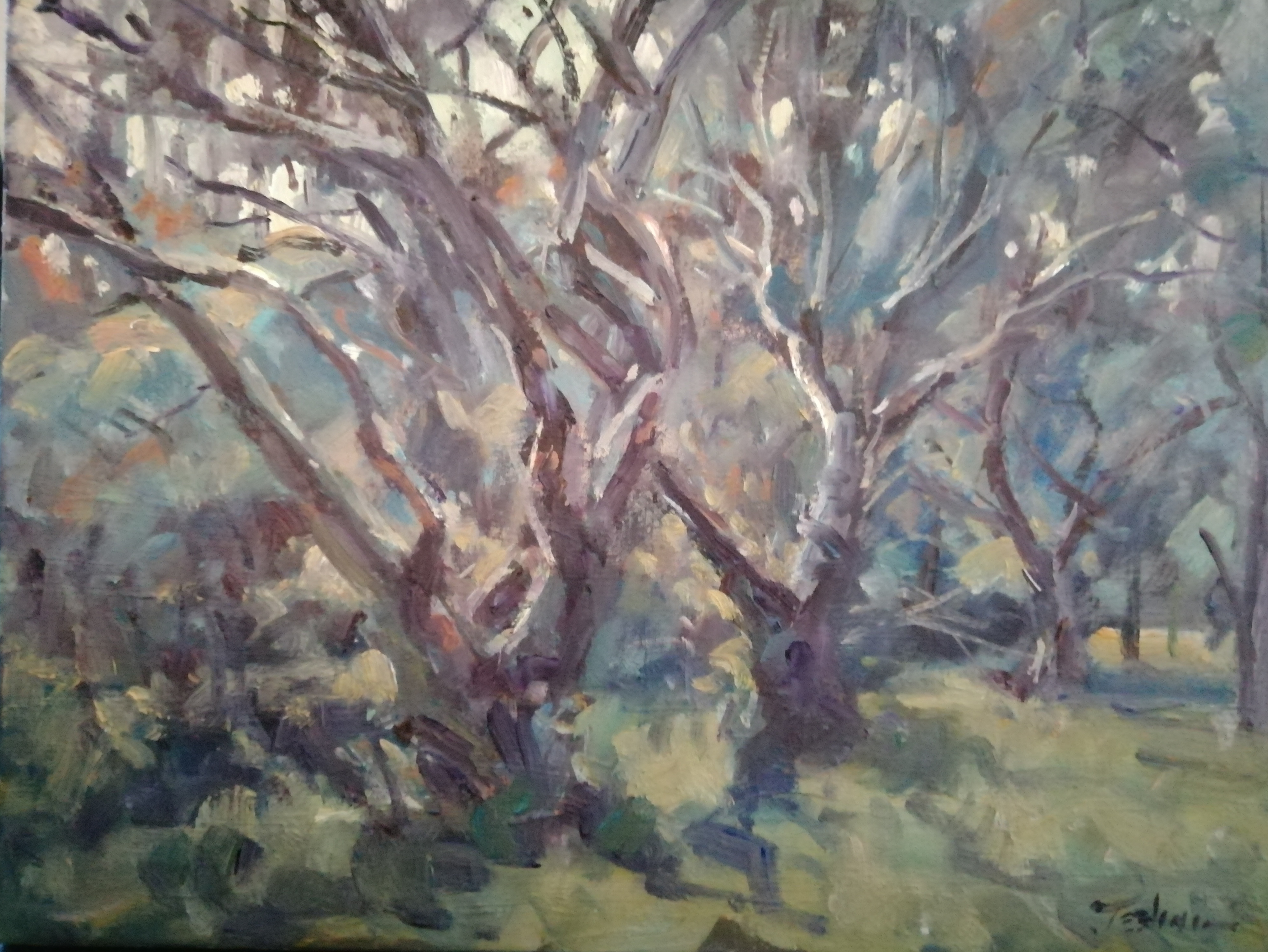 'Trees I', oil on board, 30cm x 46cm (unframed)£950